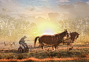 Clydesdale Posters -  Life In The Sun Poster by Trudi Simmonds