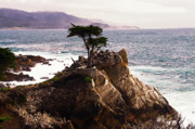 Scenic Drive Framed Prints -  Lone Cypress Tree Framed Print by George Oze