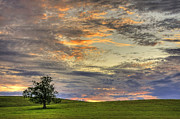 Sunset Sky Framed Prints - Lonley Tree Framed Print by Matt Champlin