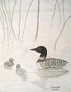 Loon Float Print by Sandra Lunde