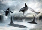 Orca Digital Art Posters -  Lost Horizons Poster by Trudi Simmonds
