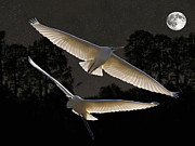 Great Birds Mixed Media Posters -  Majestic Great Egrets  Poster by Eric Kempson