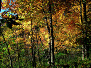 Michigan Fall Colors Posters -  Michigan Fall Colors 2  Poster by Scott Hovind