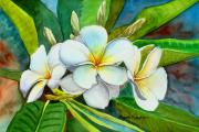 Plumeria Paintings -  My Favorite by Michele Ross