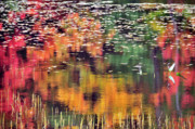 Autumn Foliage Pyrography Prints -  New England Reflections Print by Betty LaRue