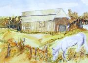 Fencing Originals -  Old Barn and Horse ..  Progress by Barbara Pearston
