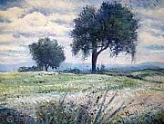 Plain Air Paintings -   Olive trees at Monte Cardeto Italy 2009  by Enver Larney
