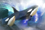 Orca Digital Art Posters -  Orca Wild Poster by Trudi Simmonds