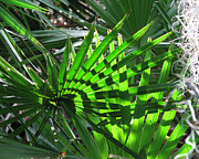 Saw Palmetto Photos -  Palmetto Patterns by Peg Urban