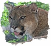Panther 2 Print by Larry Linton