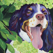 Dog Greeting Cards Prints -  Peek-A-Boo Print by Pat Saunders-White            