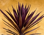 Stucco Posters -  Purple Giant Dracaena Santa Fe Poster by John Hansen