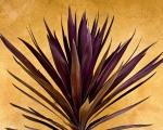 Purple Giant Dracaena Santa Fe Print by John Hansen