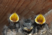 Portret Art -  Raising baby birds  www.pictat.ro by Preda Bianca Angelica