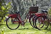 Bicycle Basket Prints -  Red Bicycle in the Country Print by Anahi DeCanio