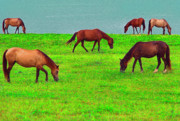 Puerto Rico Digital Art -  Seaside Grazing by Thomas R Fletcher
