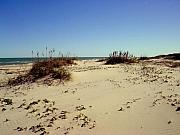 Sand Dunes Prints -  South Padre Island dunes Print by Evelyn Patrick