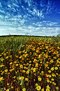 Field. Cloud Prints -  Spring Print by Stylianos Kleanthous