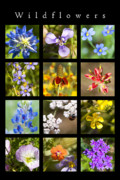 Flowers Posters Posters -  Spring Wildflowers Poster by Stephen Anderson