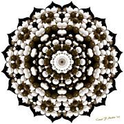 Sunflower Shape Kaleidoscope  Print by Carol F Austin