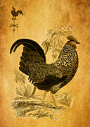 Weathervane Digital Art Prints -  Thanksgiving Rooster Print by Sarah Vernon