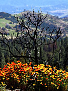 Mountian Prints -  Tree And Poppies Print by Gary Brandes