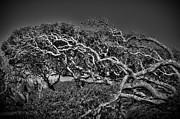 Richard Burr Acrylic Prints -  Trees Please Acrylic Print by Richard Burr