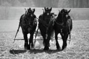 Guy Whiteley Photography Prints -  Tres Amigos 1634 Print by Guy Whiteley