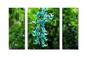 Turquoise Jade Vine  Print by Elaine Manley