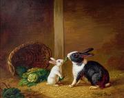 Basket Painting Metal Prints -  Two Rabbits Metal Print by H Baert
