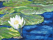 Laurel  McCallum -  Water Lily Blooming