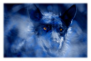 Canidae Photos -  Wolf by Mal Bray