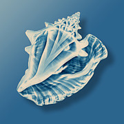 Seashell Mixed Media -  X-Ray of a Conch Shell by Mark Greenberg