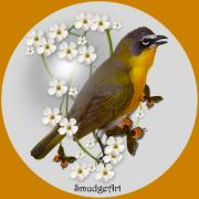 Chat Digital Art Posters -  Yellow Breasted Chat Poster by Madeline  Allen - SmudgeArt