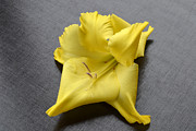Gladiolus Photos -  Yellow Gladiolus Portrait by Terence Davis