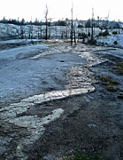 Gregory Dyer -  Yellowstone National Park - Minerva Terrace - desolation