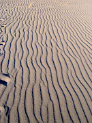 Sand Dunes Metal Prints - 06030106 Metal Print by Theresa Baker