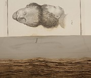 Freak Show Prints - 1787 Two Headed Boy Of Bengal By E. Home Print by Paul D Stewart