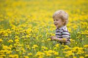 Caucasians Posters - 18-month-old Boy In Dandelion Field Poster by Susan Dykstra
