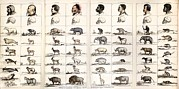 Agassiz Prints - 1854 Agassiz Human Origins Not Shared Print by Paul D Stewart
