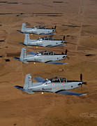 In A Row Art - A Formation Of Iraqi Air Force T-6 by Stocktrek Images