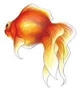 A Goldfish Print by Aya Yamene