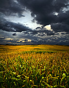 Environement Posters - A Hard Days Work Poster by Phil Koch