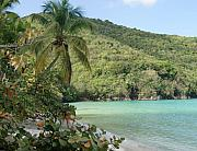 Folk Art Photos - A Maho Bay View by Richard Mansfield