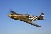P-51 Photo Posters - A P-51a Mustang In Flight Poster by Scott Germain