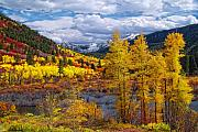Aspen Fall Colors Photos - A Symphony of Colors by Tim Reaves