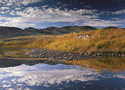 Slough Prints - Absaroka Range And Slough Creek Print by Tim Fitzharris