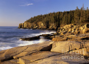 Erin Paul Donovan - Acadia National Park in...
