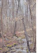 Cedars Paintings - Acushnet Cedars by David Poyant