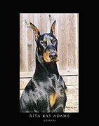 Dobe Framed Prints - Adonis Framed Print by Rita Kay Adams